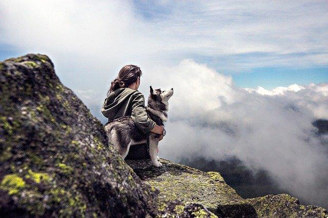 Pes jako přítel